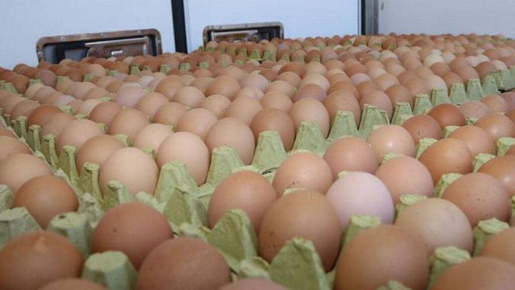 yumurta kahverengi